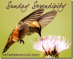 Sunday Serendipty Velveteen Mind
