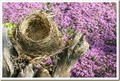 empty nest - new life