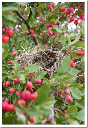 empty nest - new fruit