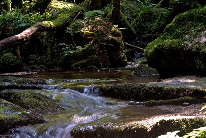 Forestwaterway