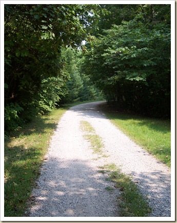 tree-lined-gravel-road